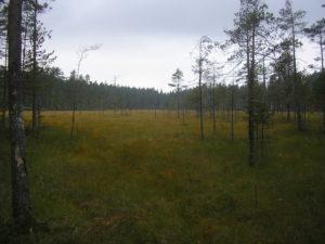 Podmáčená oblast národního parku