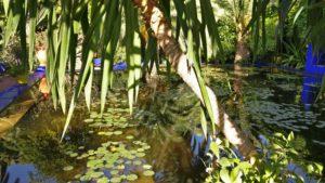 Botanická zahrada patří ke šperkům Marakéše